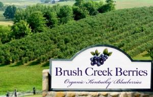 brush-creek-entry-sign